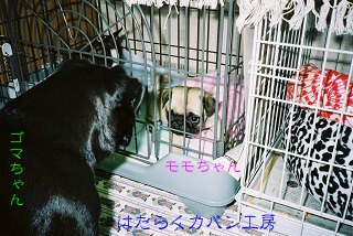 FH040021 文字入り .jpg