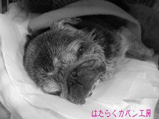 IMG_0006 文字入り .jpg