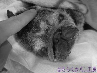 IMG_0158 文字入り .jpg