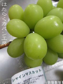 IMG_0820 文字入り .jpg