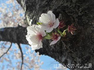 IMG_2457 文字入り .jpg