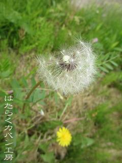IMG_2737 文字入り .jpg