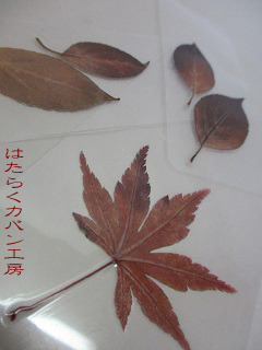 IMG_2789 文字入り .jpg