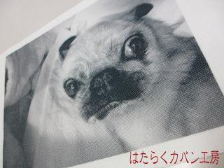 IMG_2813 文字入り .jpg