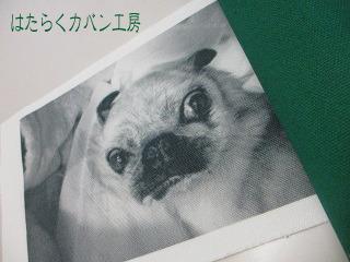 IMG_2845 文字入り .jpg
