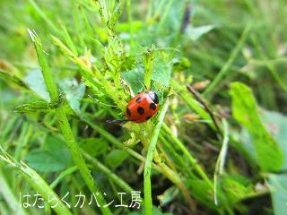IMG_3095 色補正後 (320X240) 文字入り.jpg