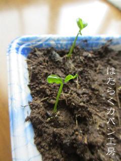 IMG_3448 文字入り .jpg