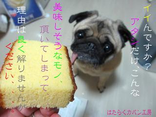 IMG_3507 モモちゃんの色付きコメント入り.jpg