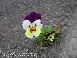 IMG_3809 文字入り .jpg