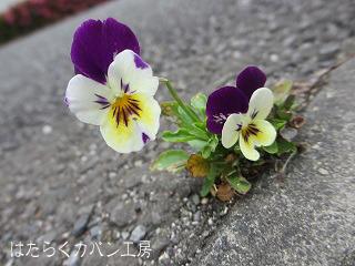 IMG_3823 文字入り .jpg