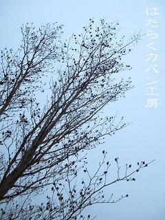 IMG_4407 文字入り .jpg