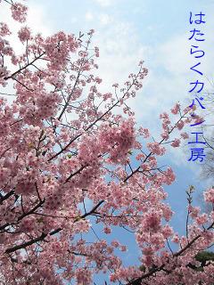 IMG_5490 文字入り .jpg