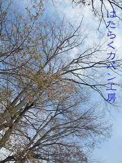 IMG_5497 文字入り .jpg