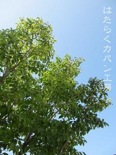 IMG_6466 文字入り .jpg