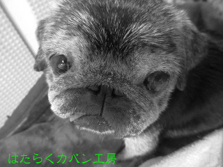 IMG_7242 文字入り .jpg